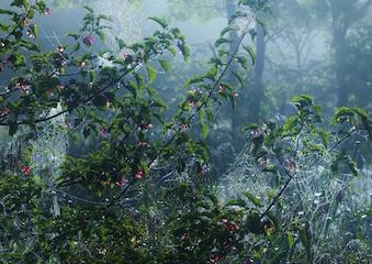森の詩 .jpg