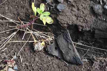 知床岬で見つけた土器の欠片.jpg
